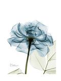 Steal Rose Giclée-Premiumdruck von Albert Koetsier