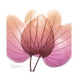 Orchid tree Pink Premium Giclee Print by Albert Koetsier