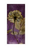Purple Opus Rose Premium Giclee Print by Albert Koetsier