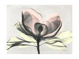 Magnolia I Gray Premium Giclee Print by Albert Koetsier