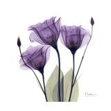 En trio av lilla blomster Premium Giclee-trykk av Albert Koetsier