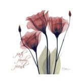 Red Tulip Faith Premium Giclee Print by Albert Koetsier