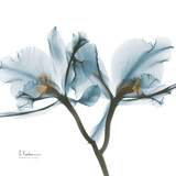 Orchid Blue Print by Albert Koetsier