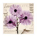 Chrysanthemum Love Premium Giclee Print by Albert Koetsier