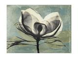 Pink Magnolia I Kunstdruck von Albert Koetsier
