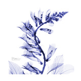 Navy Foxglove Premium Giclee Print by Albert Koetsier