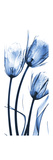 Three Blue Tulips Premium Giclee Print by Albert Koetsier