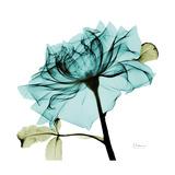Teal Rose Giclee-tryk i høj kvalitet af Albert Koetsier