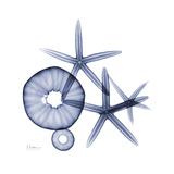 Little Urchins Premium Giclee Print by Albert Koetsier