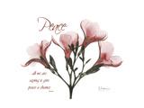 Oleander Peace Premium Giclee Print by Albert Koetsier