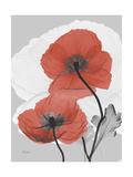 Red Moment Poppy Premium Giclee Print by Albert Koetsier
