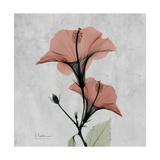 Hibiscus Marsala Premium Giclee Print by Albert Koetsier