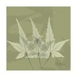 Green Leaf Square 3 Premium Giclee Print by Albert Koetsier