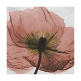 Poppy Marsala Premium Giclee Print by Albert Koetsier