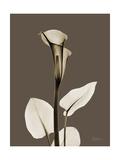 Tonal Calla Lily Prints by Albert Koetsier