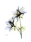 Soft Azalea Portrait Premium Giclee Print by Albert Koetsier