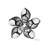 Gray Snail Shells 1 Prints by Albert Koetsier