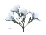 Oleander Portrait Giclée-Premiumdruck von Albert Koetsier