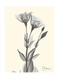 Flora Portrait 2 Premium Giclee Print by Albert Koetsier
