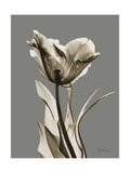 Tonal Tulip on Gray Prints by Albert Koetsier