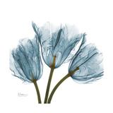 Tulips Blue Reproduction giclée Premium par Albert Koetsier