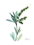 Lily of the Valley Premium Giclee Print by Albert Koetsier