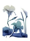 Morning Bloom 1 Posters by Albert Koetsier