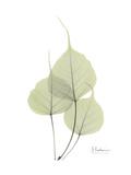 Bo Tree Portrait Premium Giclee Print by Albert Koetsier
