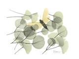 Explosion of Spring Giclee-tryk i høj kvalitet af Albert Koetsier