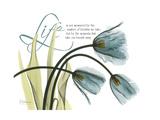 Life Tulips Premium Giclee Print by Albert Koetsier