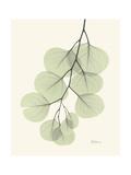The Eucalyptus Moment Premium Giclee Print by Albert Koetsier