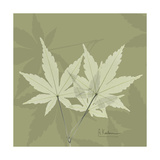 Green Leaf Square 1 Premium Giclee Print by Albert Koetsier