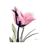 Pink Tulip Art by Albert Koetsier