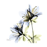 Blue Azalea Premium Giclee Print by Albert Koetsier