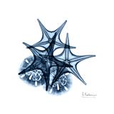 Blue Starfish 2 Premium Giclee Print by Albert Koetsier