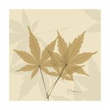 Japanese Maple Moments 1 Premium Giclee Print by Albert Koetsier