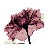 Chiant Rose 1 Premium Giclee Print by Albert Koetsier