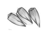 Triplets Premium Giclee Print by Albert Koetsier