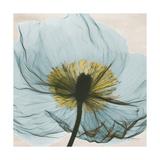 Poppy Close-Up Premium Giclee Print by Albert Koetsier
