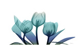 Tulips Prints by Albert Koetsier