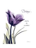 Purple Tulip Dream Premium Giclee Print by Albert Koetsier