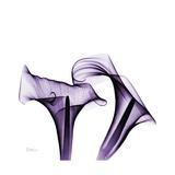 Grape Calla Lilies 1 Giclée-Premiumdruck von Albert Koetsier