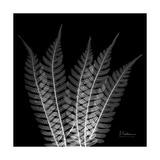 Xray Tree Fern Premium Giclee Print by Albert Koetsier