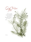 Xmas Evergreen Premium Giclee Print by Albert Koetsier