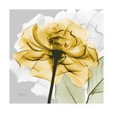 Rose in Gold 4 Posters by Albert Koetsier