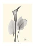 Flora Portrait 1 Premium Giclee Print by Albert Koetsier