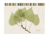 Aspen Colors Premium Giclee Print by Albert Koetsier