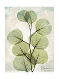 Aged Stone Eucalyptus Prints by Albert Koetsier