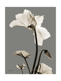 Tonal Cyclamen Prints by Albert Koetsier