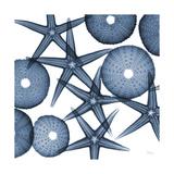 Starfish Blues Premium Giclee Print by Albert Koetsier